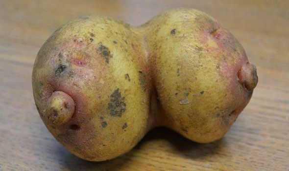 potato boobs Os vegetais mais bizarros do mundo
