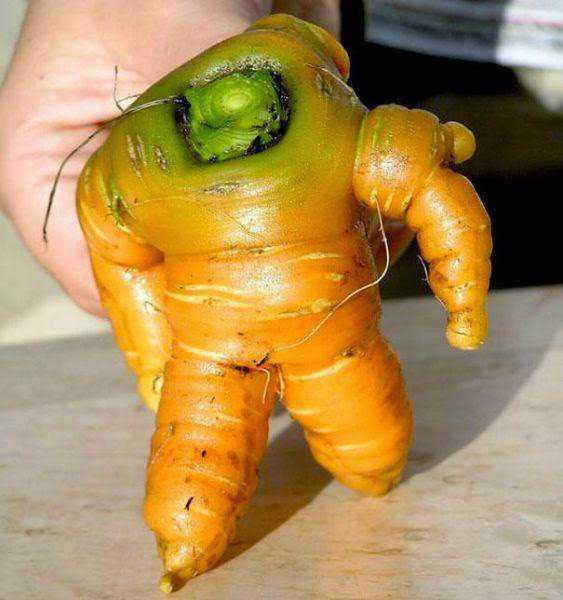 vegetables that are desperately trying to be something else 640 09 Os vegetais mais bizarros do mundo