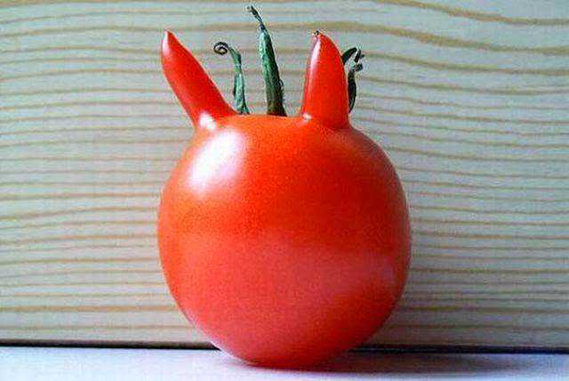 vegetables that are desperately trying to be something else 640 13 Os vegetais mais bizarros do mundo
