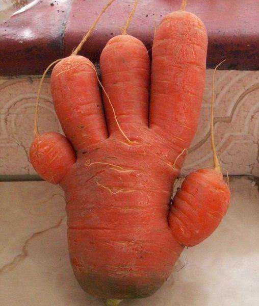 vegetables that are desperately trying to be something else 640 30 Os vegetais mais bizarros do mundo