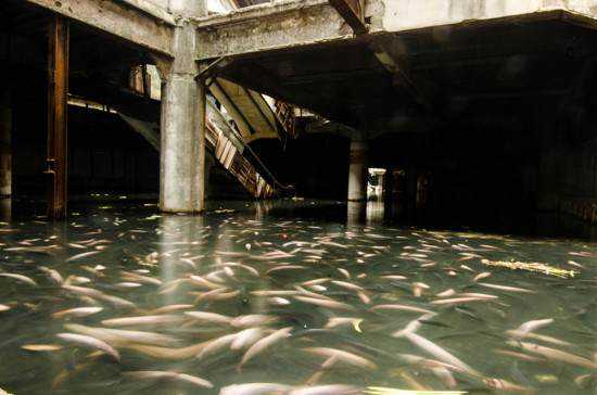mall full of fish 550x364 Shopping abandonado virou atração bizarra