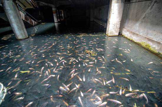 mall full of fish2 550x364 Shopping abandonado virou atração bizarra