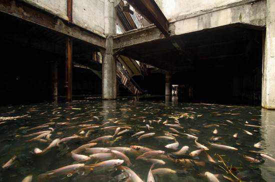 mall full of fish3 550x364 Shopping abandonado virou atração bizarra
