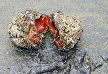 pedracomtripas Pedra com tripas: O bicho mais bizarro do mundo?