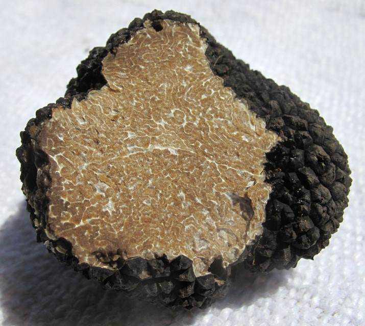 cogu5 Cogumelos comestíveis e venenosos: Aprenda a diferenciar
