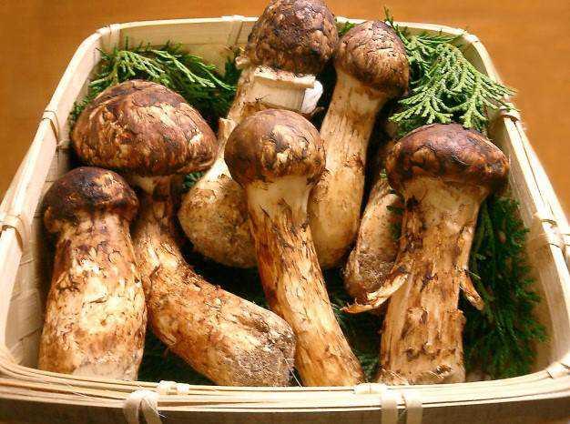 cogu8 Cogumelos comestíveis e venenosos: Aprenda a diferenciar