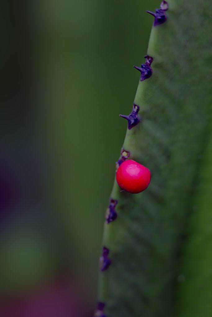 frutinha vermelha low Fotos do fim de semana