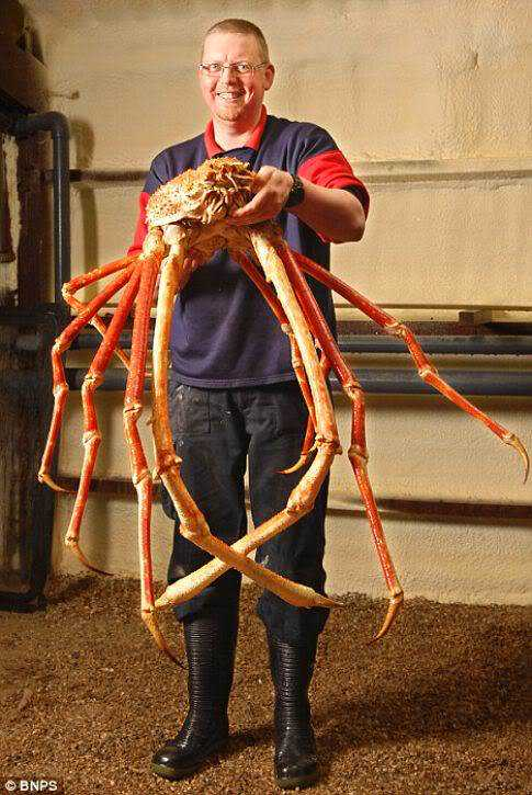 worlds-biggest-crab