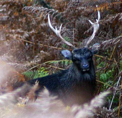 tumblr inline mtm2zpUVQR1qcc8w2 Incríveis animais pretos