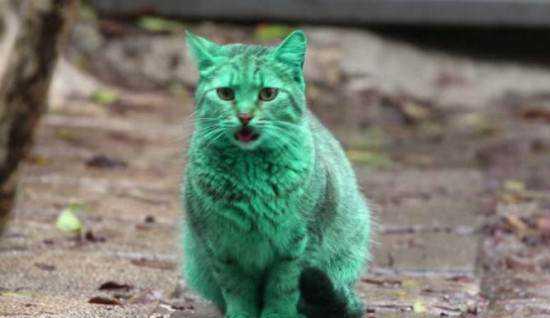green cat Bulgaria 550x318 O bizarro gato verde da Bulgária