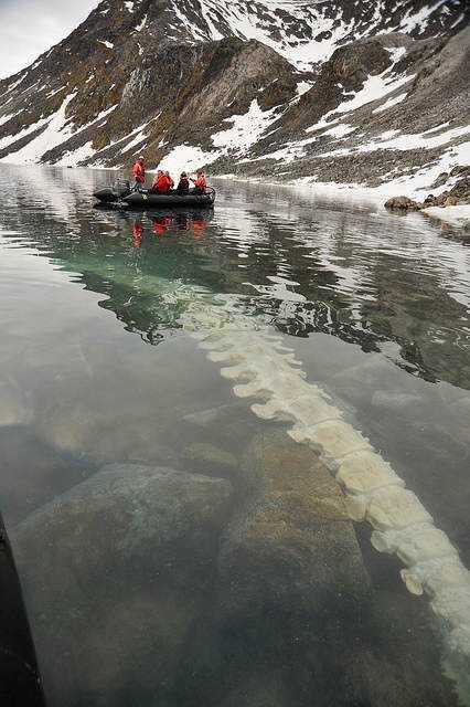 ouEo6Xi Descobriram o que era a criatura bizarra do ártico