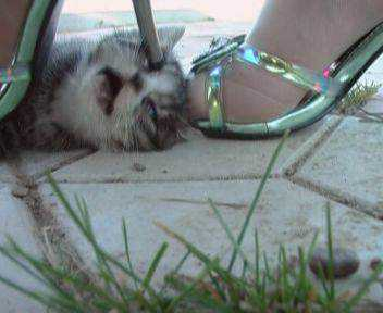 xin 540303031152619299153 O bizarro gato verde da Bulgária