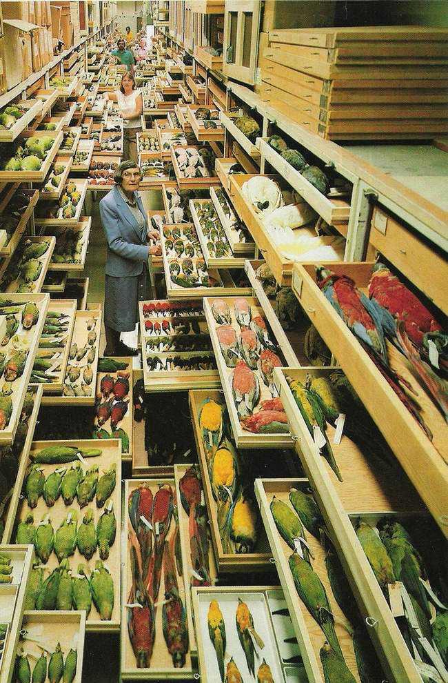 xx O armário dos pássaros mortos