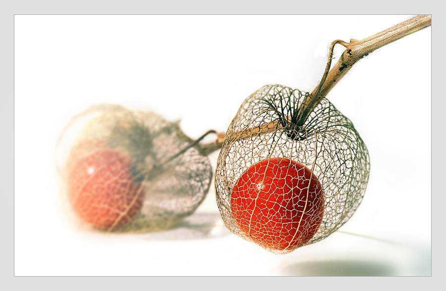 43625 Frutas esquisitas