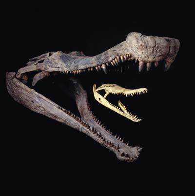 1188973299 Crocodilo gigante