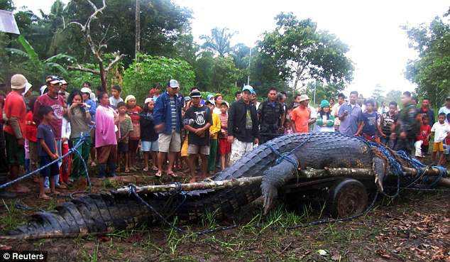 article 2034007 0DBB3AAF00000578 611 634x369 Crocodilo gigante