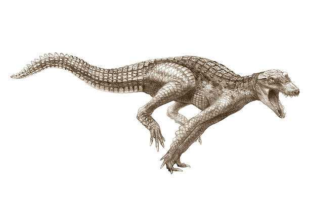 crocs 07 Crocodilo gigante