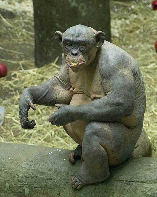 hairless monkey 3 Chupacabra? O que é a misteriosa criatura de Bornéu?