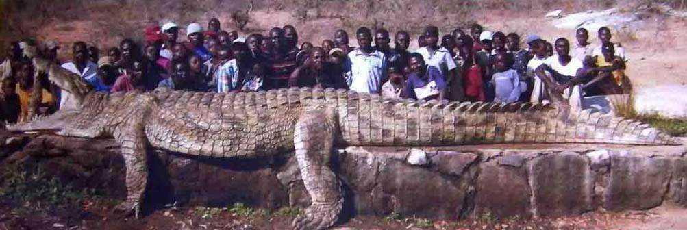 monstercroc Crocodilo gigante