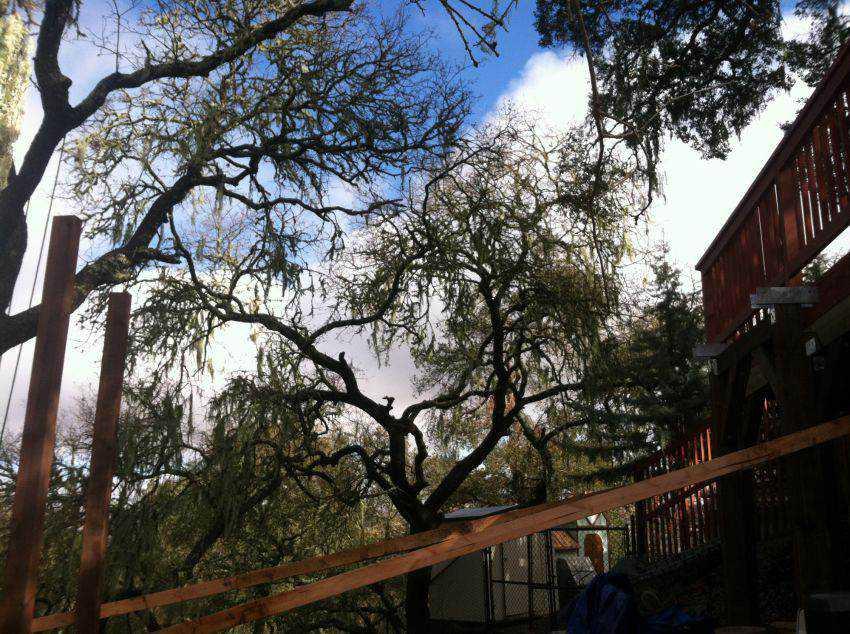 fef7f35e45a618a0f6fbcbe7cf53b4ec Casa na árvore: Um projeto completo