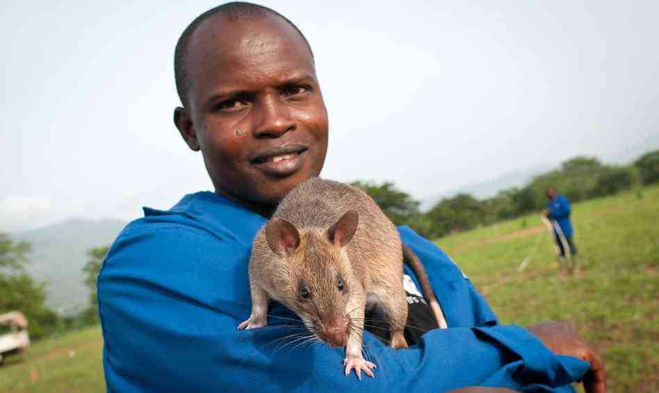 TB Rat1 O bizarro homem comedor de ratos