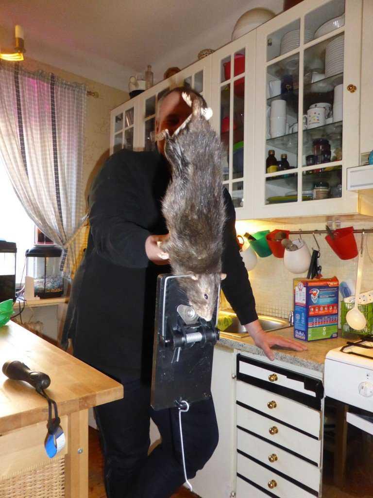 rat outta hell 1 768x1024 O bizarro homem comedor de ratos
