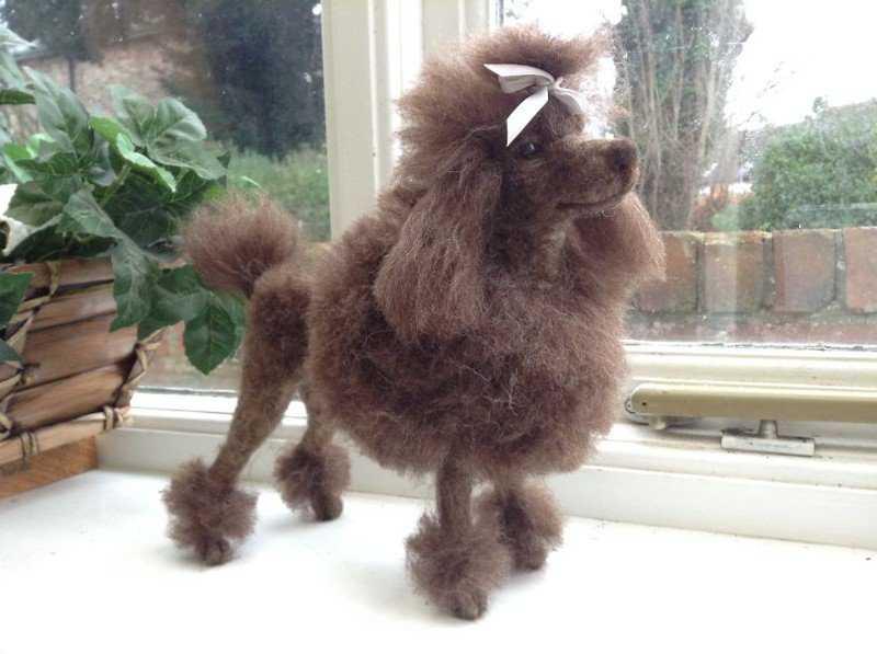 Parece um poodle?