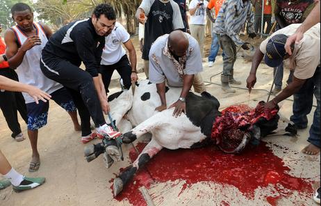 Human ritual mutilationaliens are much neater A vaca abduzida por um ufo?