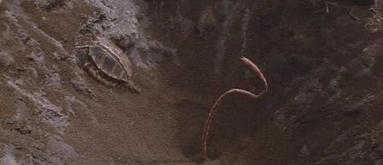 enemy3 Criatura flagrada pela NASA?! Será que há vida em Marte mesmo?