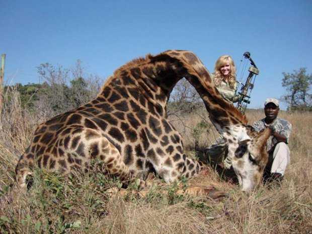 giraffe2 Caçador: O pior do lixo humano