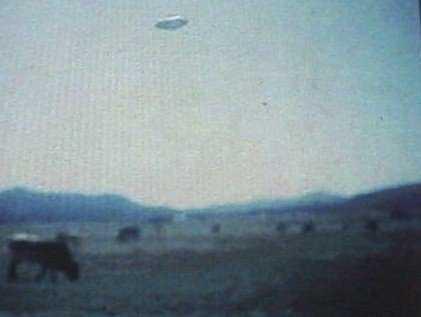 r0301785 A vaca abduzida por um ufo?