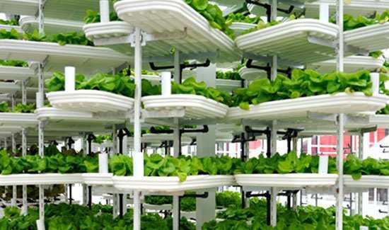 North America First Vertical Urban Farm Fazendinha feliz e os ratos do meu pai