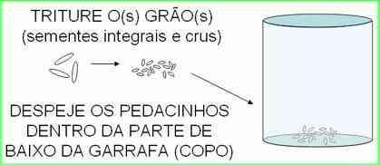 Armadilha para mosquito da dengue com garrafa Pet 6 Pernilongo: O maior desafio do mundo