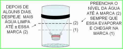 Armadilha-para-mosquito-da-dengue-com-garrafa-Pet-9
