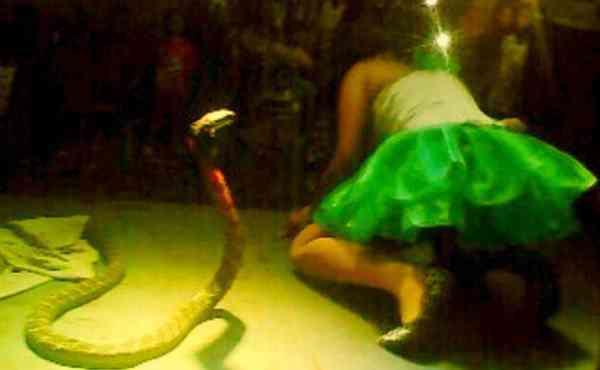 Irma Bule snake 600x370 Dançarina faz presepada no palco com cobra, é mordida e morre ali mesmo