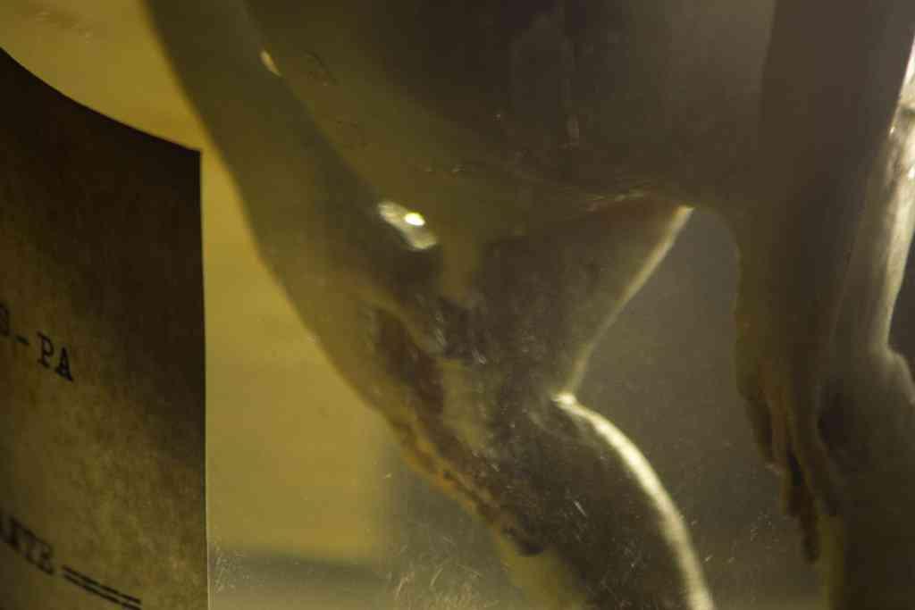 alien no pote detalhes Feto alien no tubo