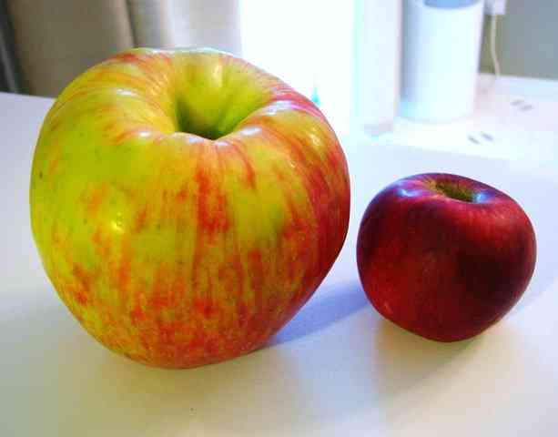0181 A maçã mais bizarra que você já viu