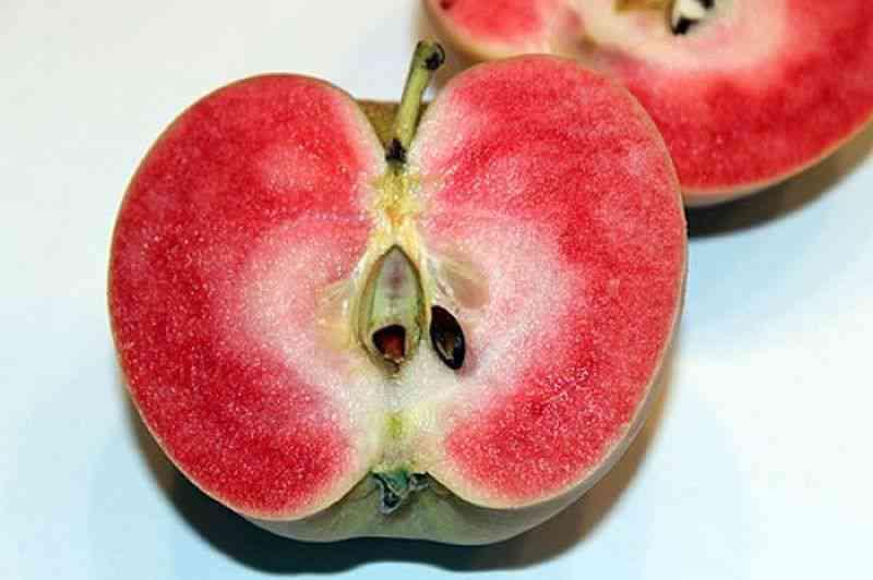0 1968a8 77e93383 orig A maçã mais bizarra que você já viu