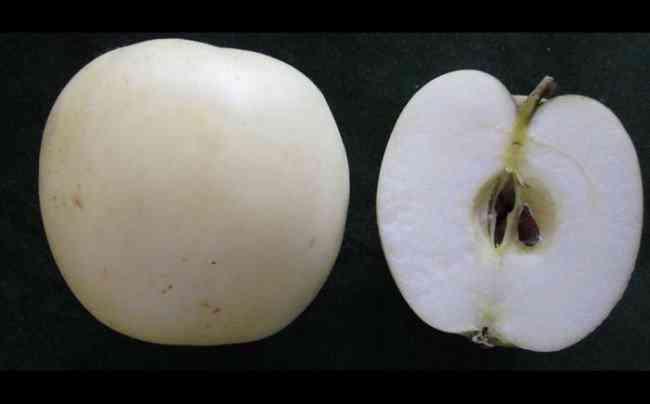 Unusual Apples 7 650x404 A maçã mais bizarra que você já viu