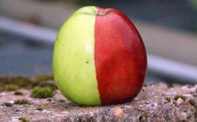 Unusual Apples 8 650x404 A maçã mais bizarra que você já viu