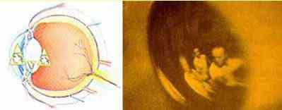 image010 O mistério da Virgem de Guadalupe