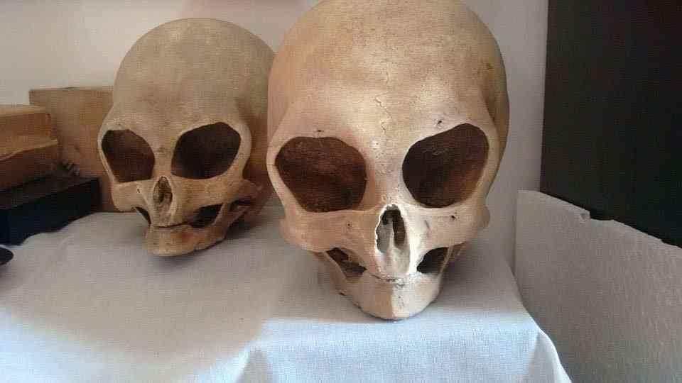 cranios As relíquias de Czernica