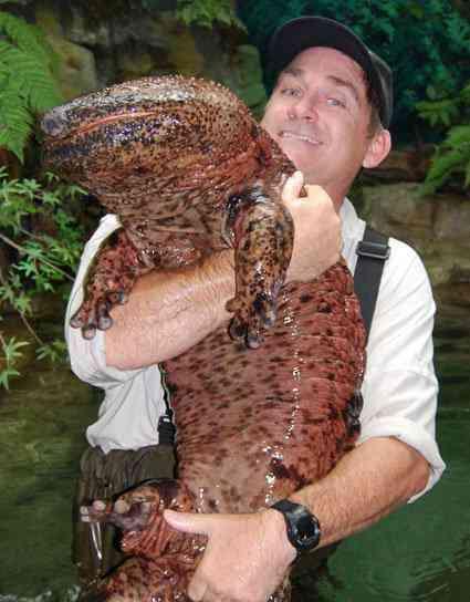 giant salamander A criatura do fundo