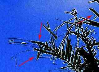 pixels3 Análise da fotografia de um Ufo