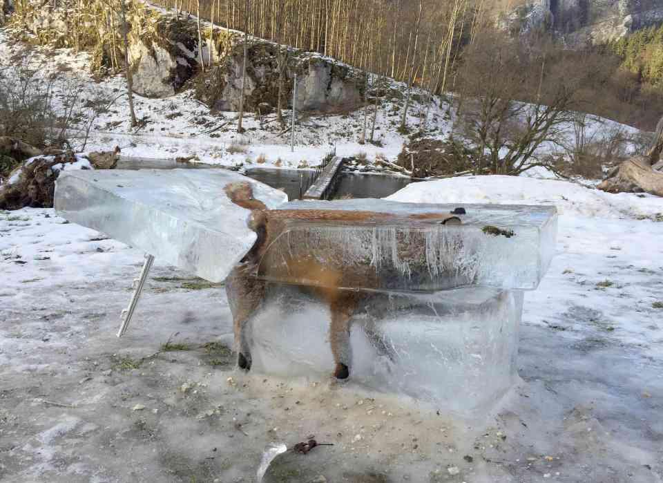 0 1bcc1e 5a98adbf orig O bizarro caso da raposa congelada