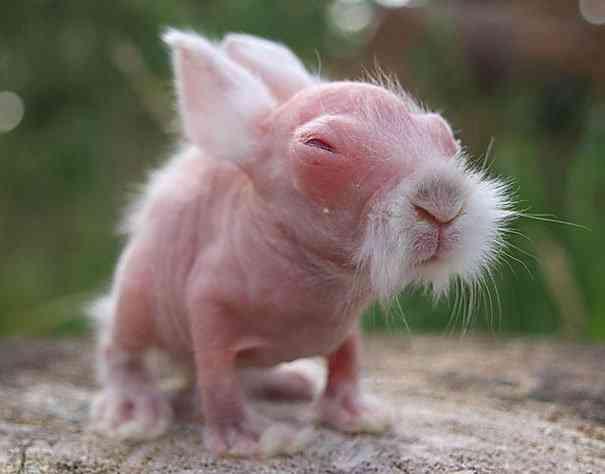 hairless bald animals 1 Incríveis animais... Carecas