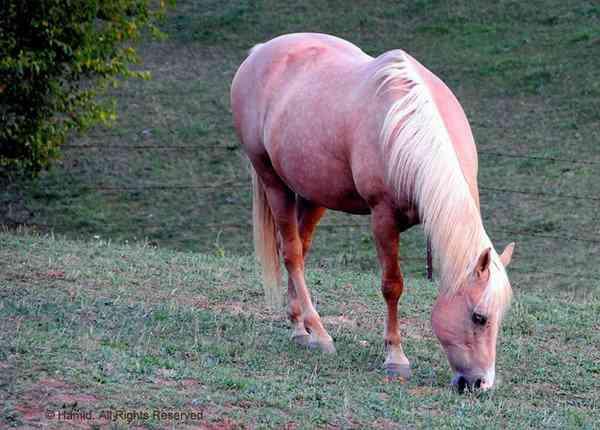hairless horse thumb2 Incríveis animais... Carecas