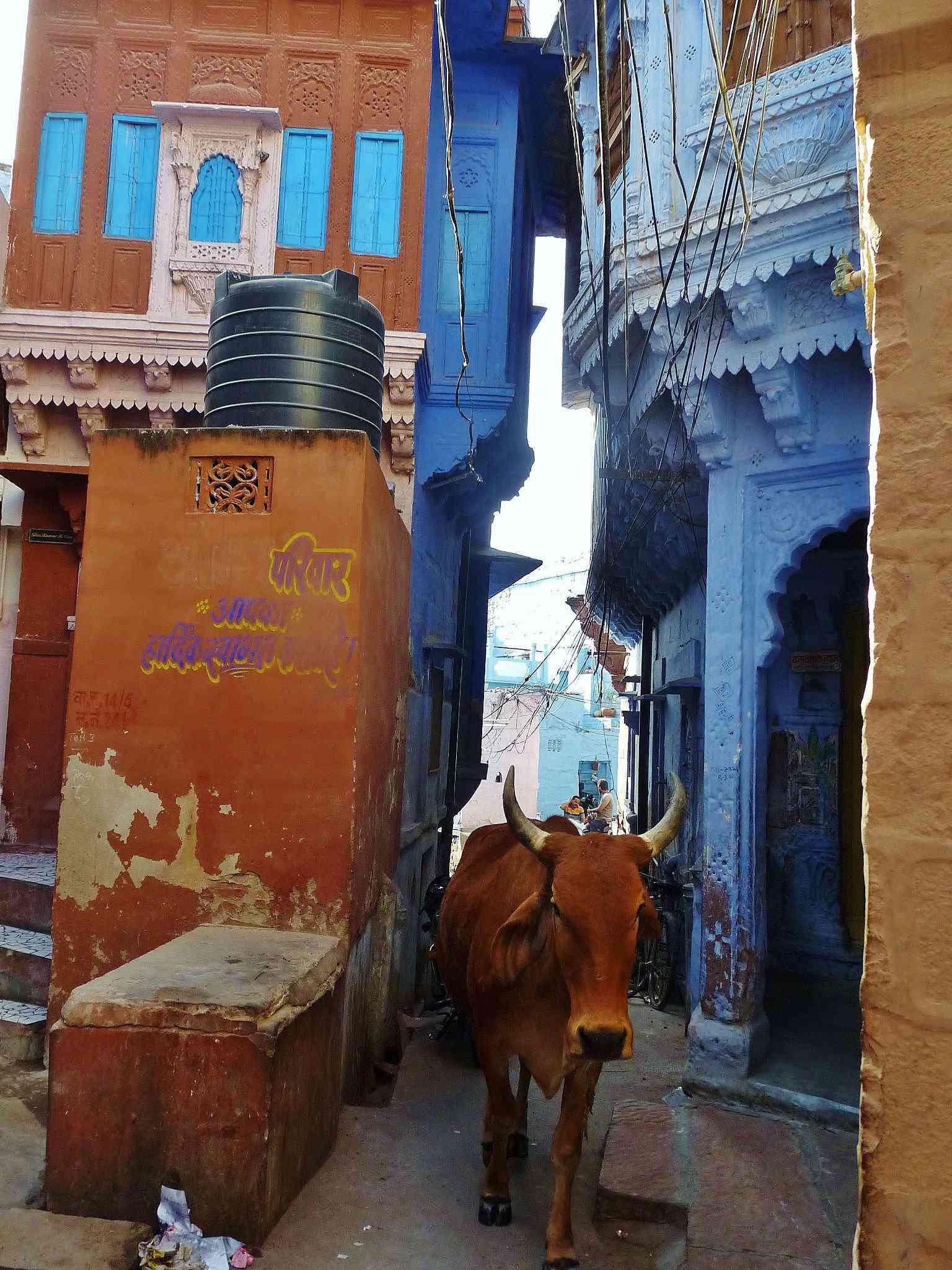0 cb33b c076b93f orig A cidade azul da Índia