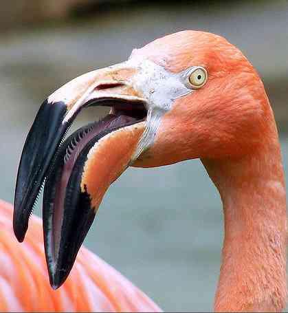 0b2e4bea1661a3dba234d1b77e5687b9 Top 10 das aves mais feias do mundo
