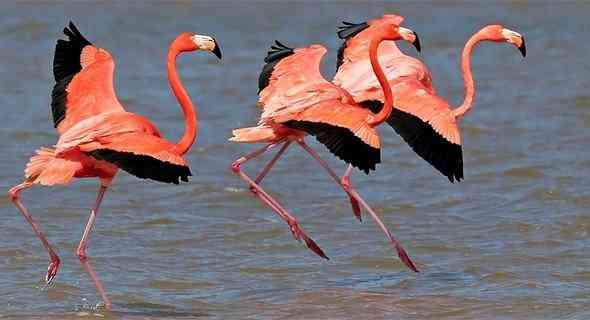51022801 Top 10 das aves mais feias do mundo